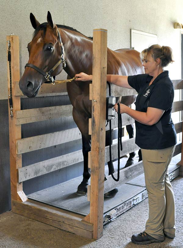 equine theraplate benefits